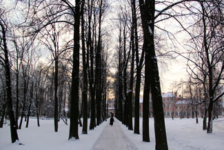Path through trees in winter
